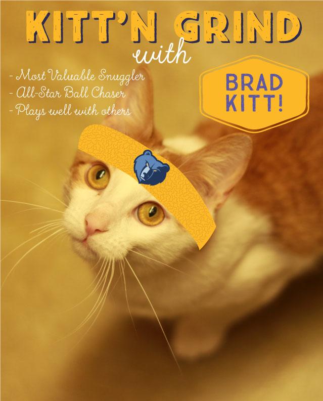 cat dating ads