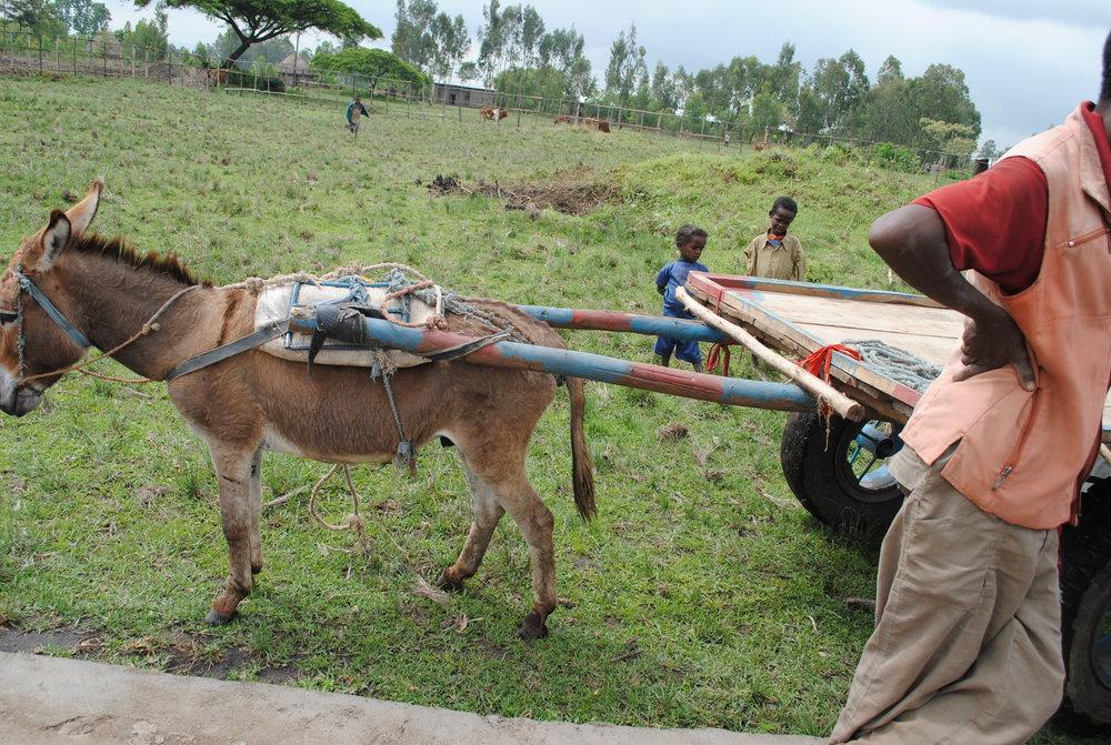 Ethiopia July 2015 952.JPG