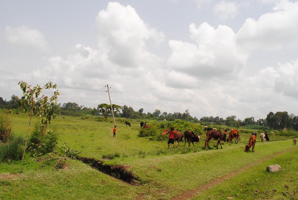 Ethiopia July 2015 1069.JPG