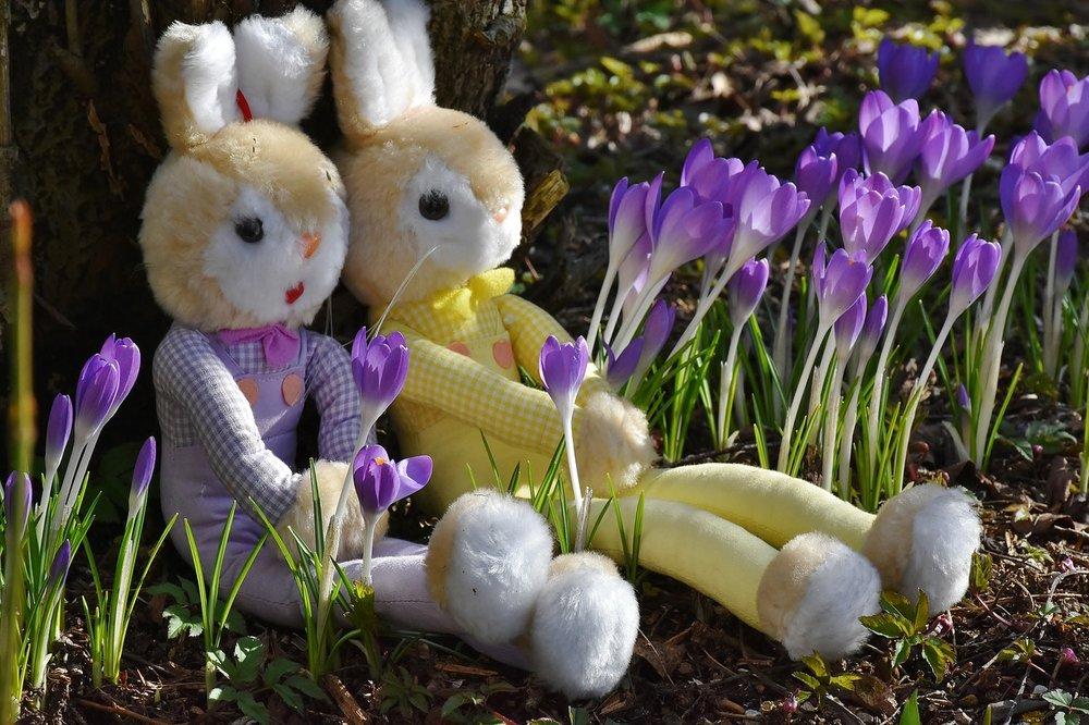 rabbit-2137741_1280.jpg