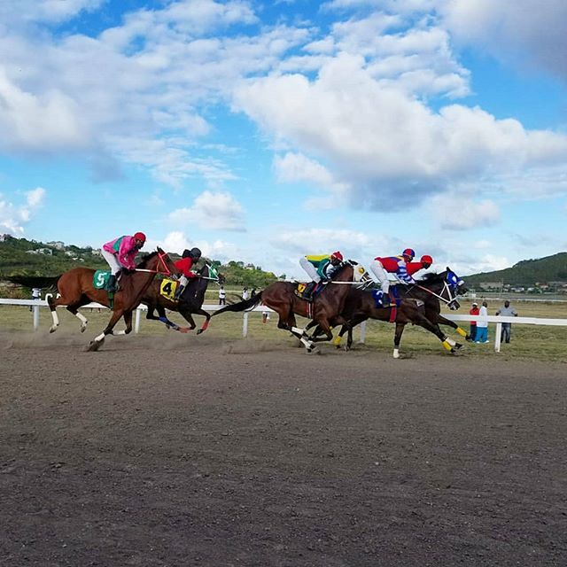 #Repost @mohammidwalbrookphotos ・・・ I tried out my Samsung S8+ at horse racing yesterday at the cassada gardens race track on Antigua. #antiguabarbuda #antigua #caribbean #horse #horseracing #equine #samsungs8plus #samsung #island #islandlife #blueskies #phoneography #instagram #insta #svasummerlens #svabfaphotography #svaalumni