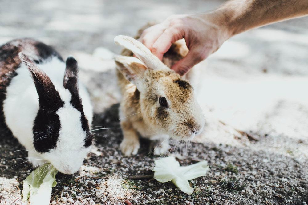 rabbit-island-photos-by-samantha-look.jpg