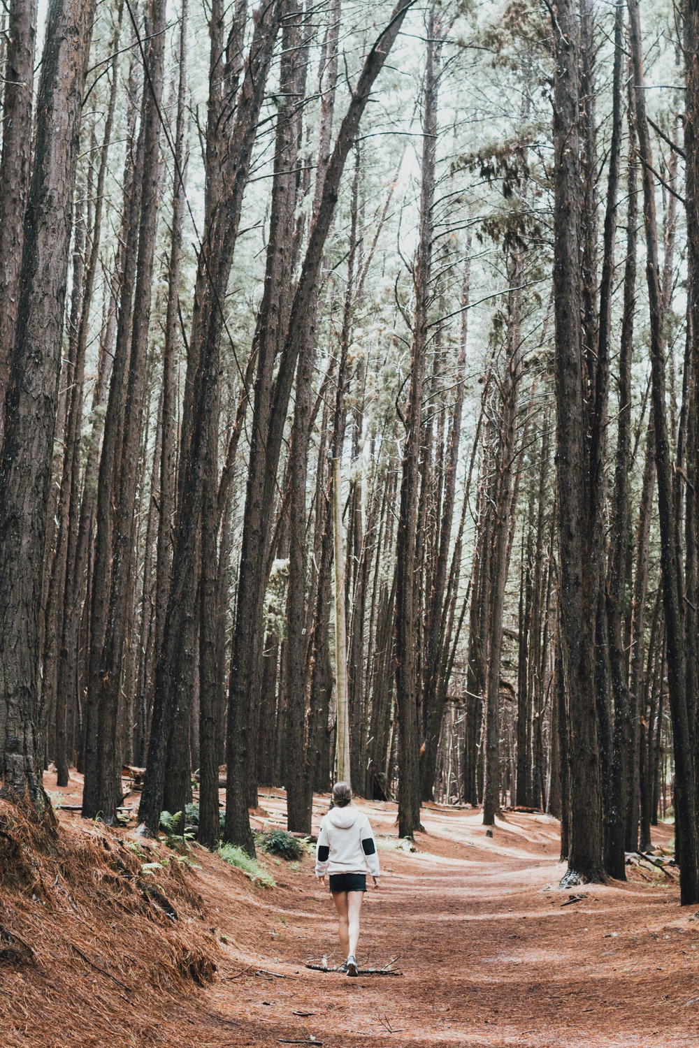 waihou-spring-forest-reserve-photo-by-samantha-look.jpg