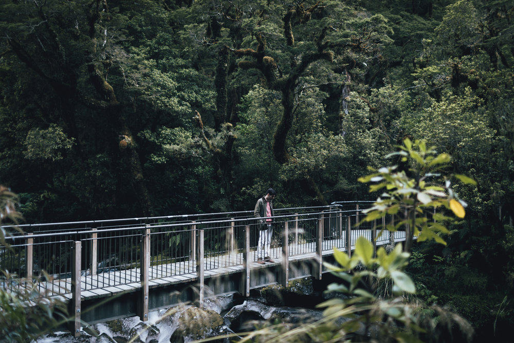 new-zealand-milford-sound-photo-by-samantha-look.jpg