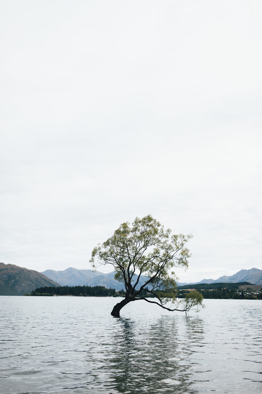 new-zealand-wanaka-tree-photo-by-samantha-look.jpg