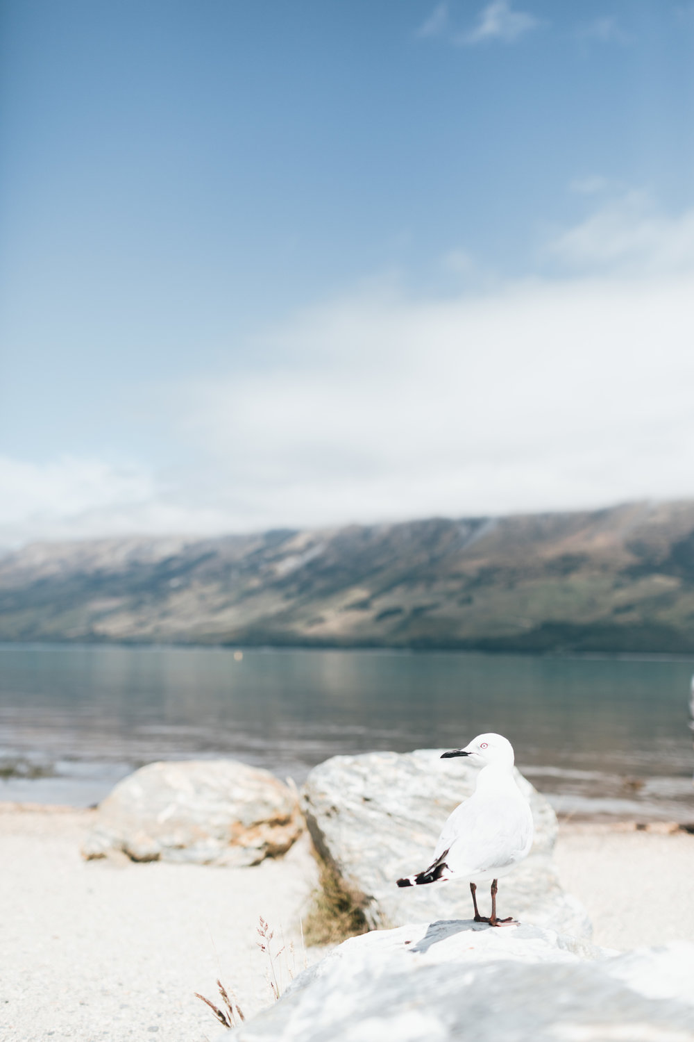 new-zealand-glenorchy-photo-by-samantha-look.jpg