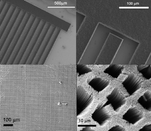 Vertical Carbon Nanotube Array