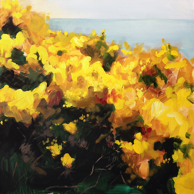 Wild Gorse Study . Oil on board. 12 x 12 inches.