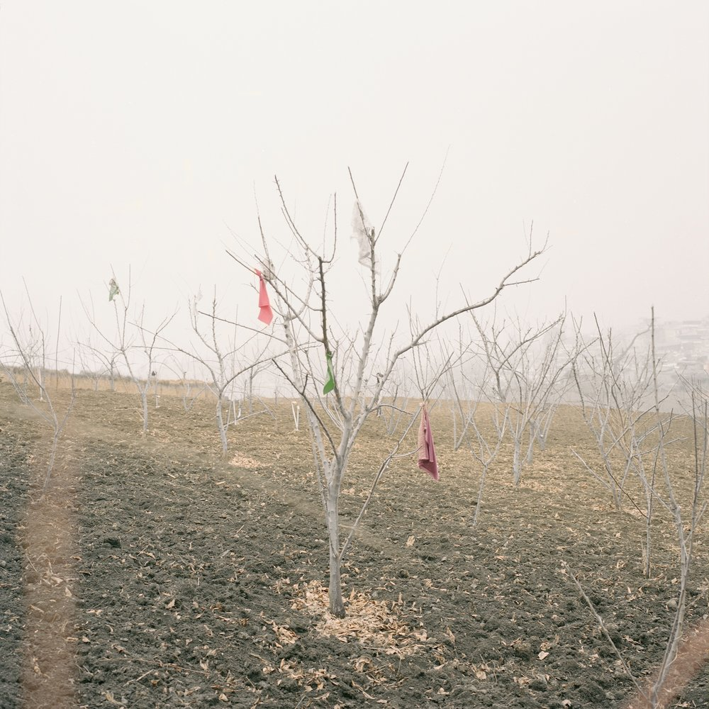 Pieces of Cloth Sprayed with Pesticide in the New Orchards, Radish Village, Sichuan, China, March 2016
