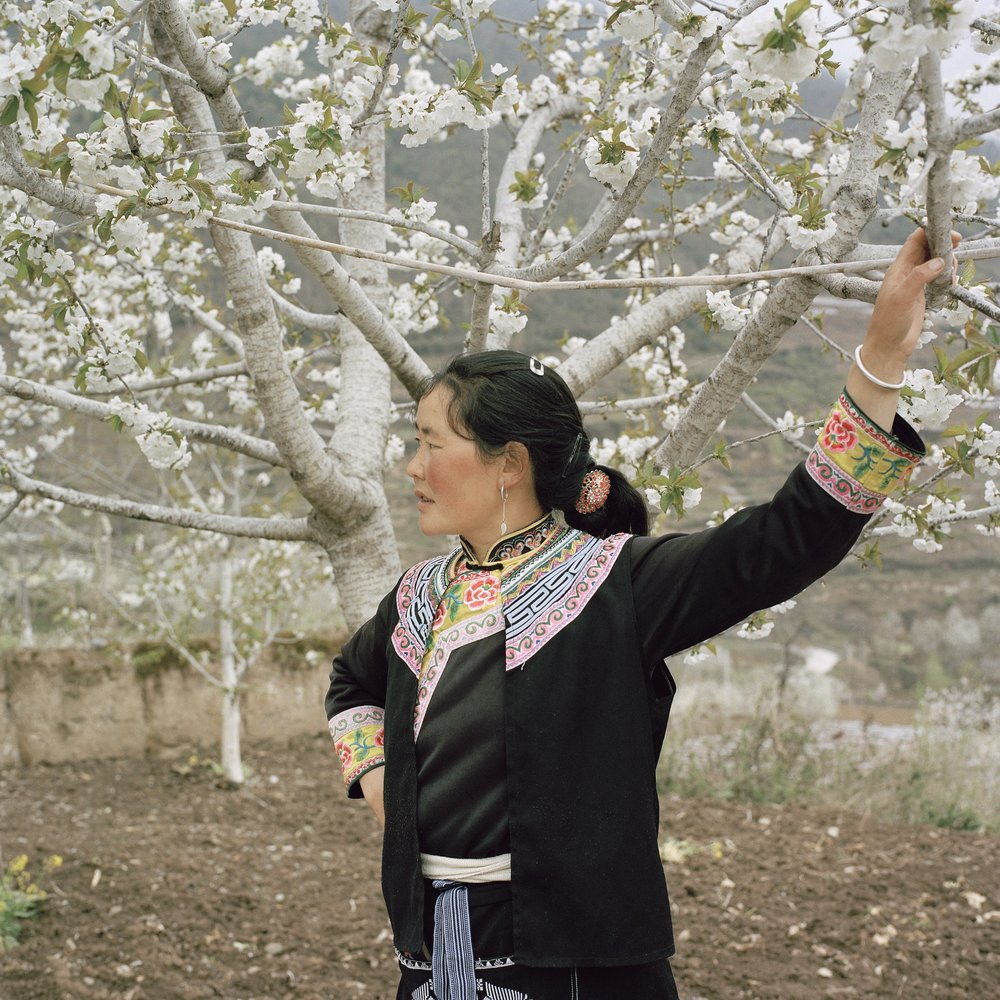 Woman and her Fully Grown Cherry Trees, Untouched by the Earthquake, Radish Village, Sichuan, China, April 2016