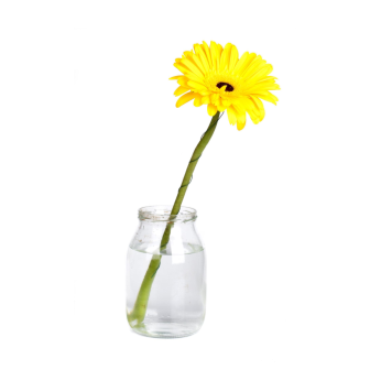Ktchn Apothecary Yellow Flower