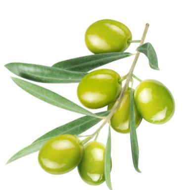 Botanical Squalane