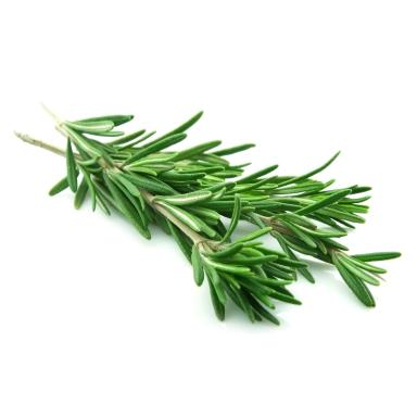 Essential Oil of Rosemary