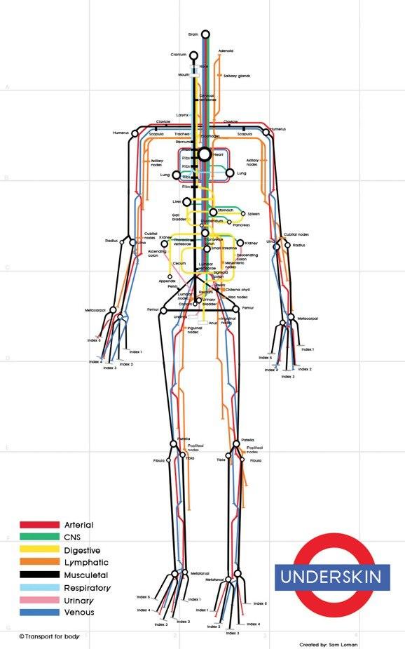 Subway anatomy