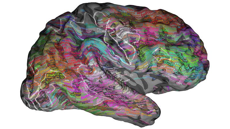 brain-map_wide-f5b773e78f6fe49ab0d6493bd3b2fd3ccacf31b1-s800-c85