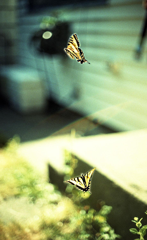 butterflys_01.jpg