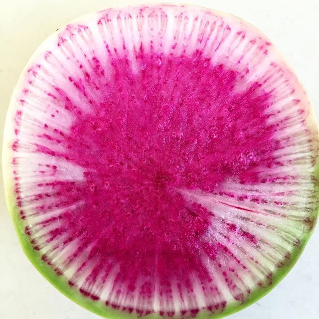 Pickle. #radish #altabajamarket #watermelon #pickle #preservation #vegetable #OrangeCounty #dtsa #SantaAna #mercado