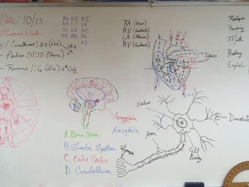 Neuro Cardio Lesson.jpg