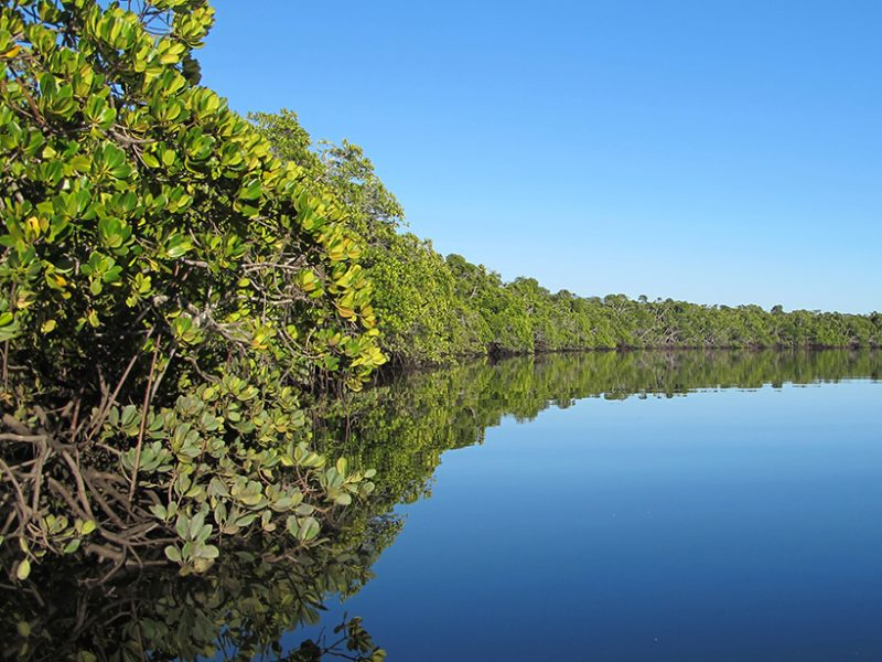 Can mangroves buffer ocean acidification?
