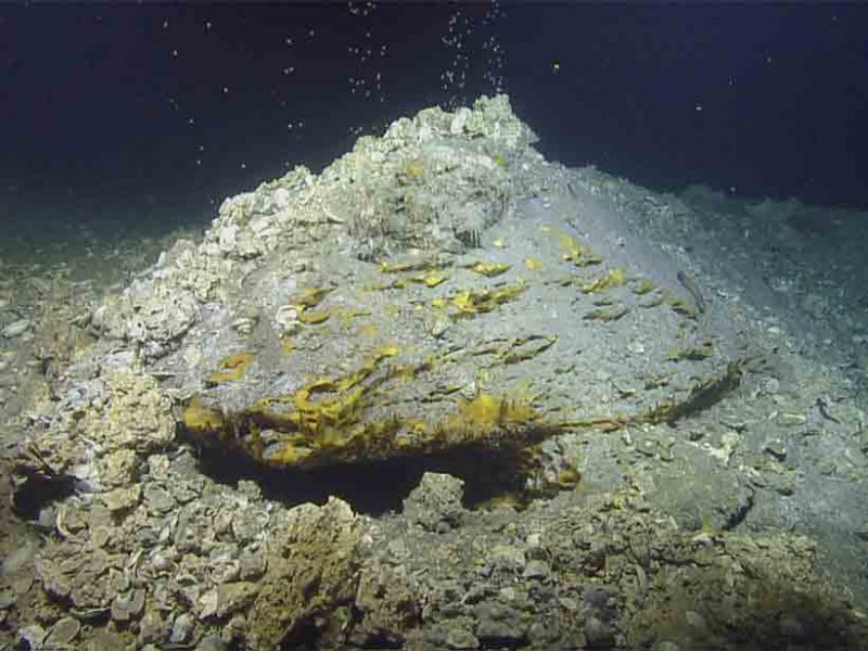 The fate of hydrocarbons seeping from the ocean floor