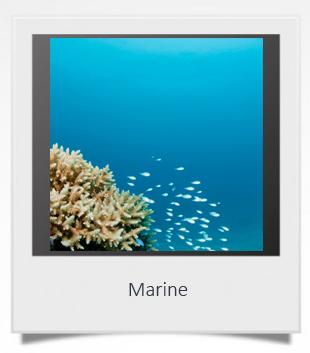 marine 1.jpg