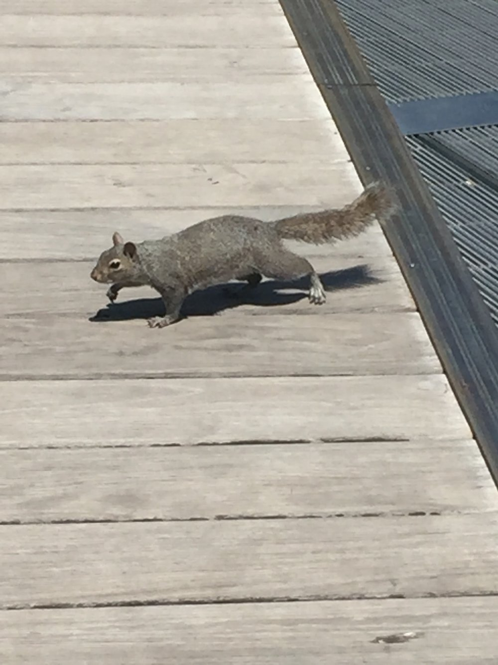 You know what's even better than a poem? - A grainy photo of a squirrel up to no good