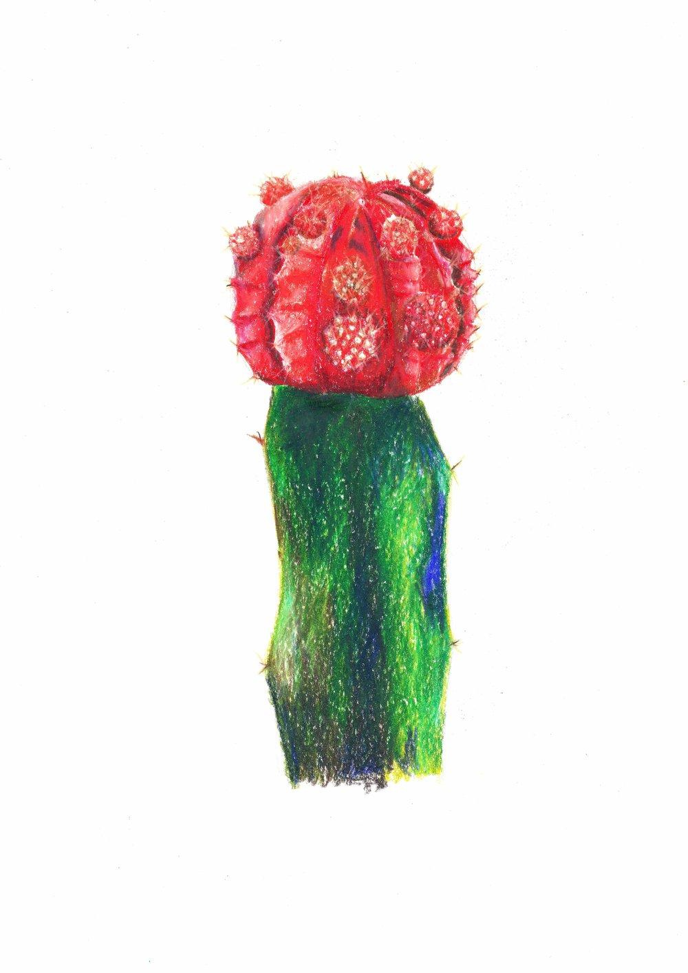 Cactus_smallfile.jpg