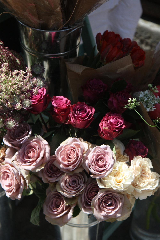 amnesia roses.jpg