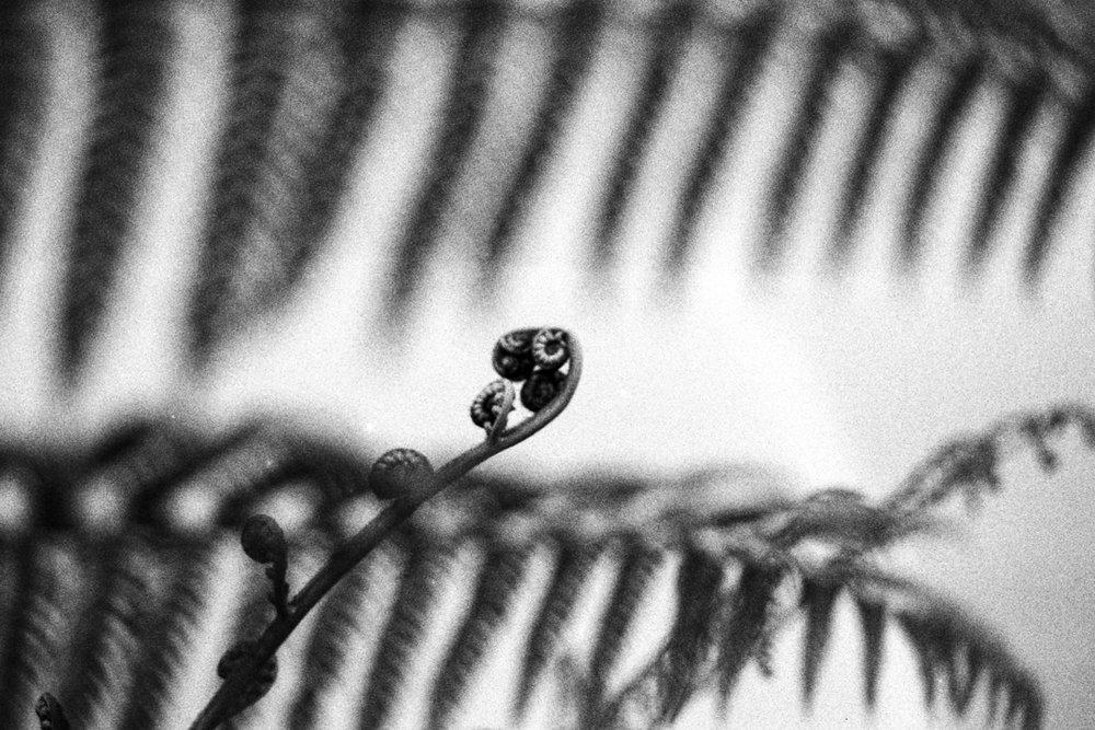 Maleny Botanic Gardens, Sunshine Coast Hinterland. Fine Art Print by Photographer Cynthia Lee