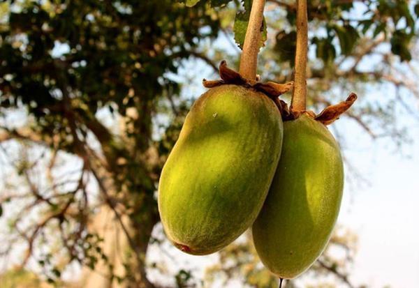 Baobab er rik på vitamin C og fiber. (Bildet er hentet  her )