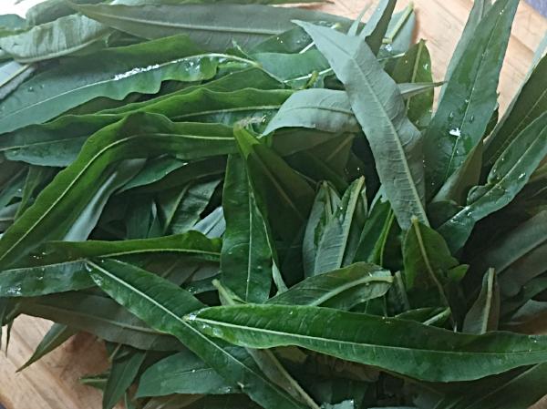 Bladene kan tørkes og brukes til te. Jeg velger å fermentere bladene før jeg tørker dem. Fermentering forsterker de positive egenskapene i ville vekster og grønnsaker. Smak, virkning, holdbarhet... det er så mange grunner til å fermentere.