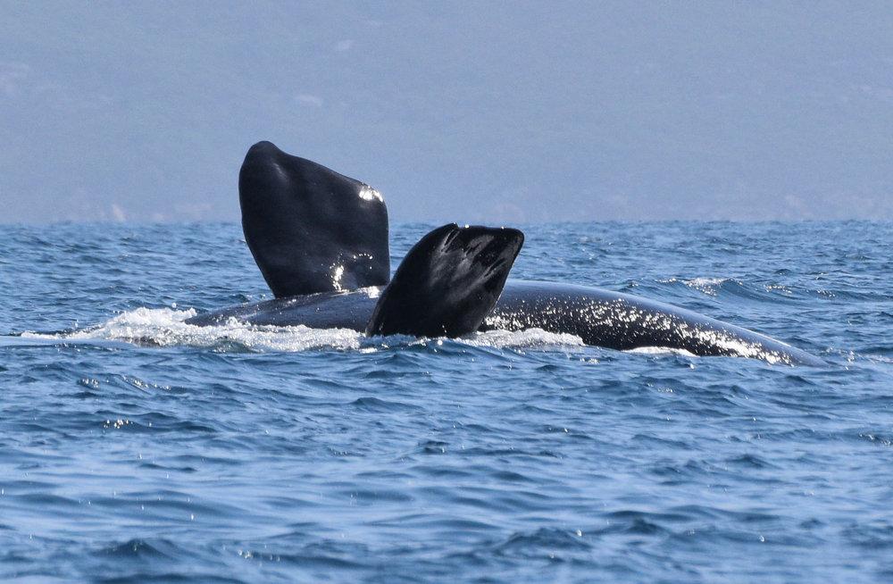 DSC_0078_SR_whale_upside.jpg
