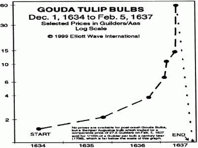 Tulip_Bulbs.jpg
