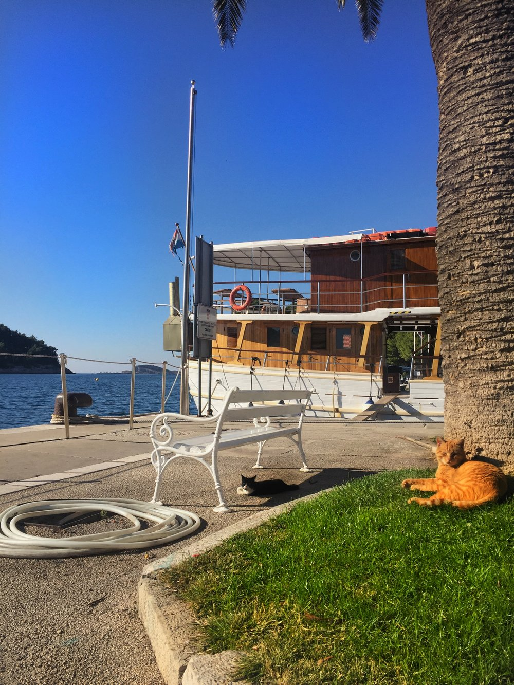 cats also rule Cavtat