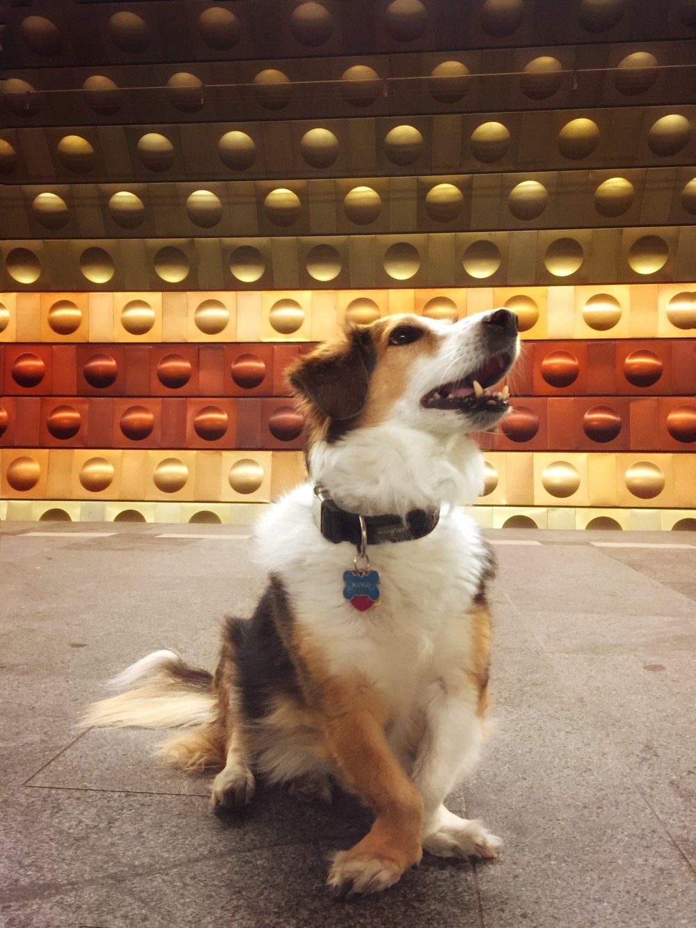 Mango enjoys the Prague metro