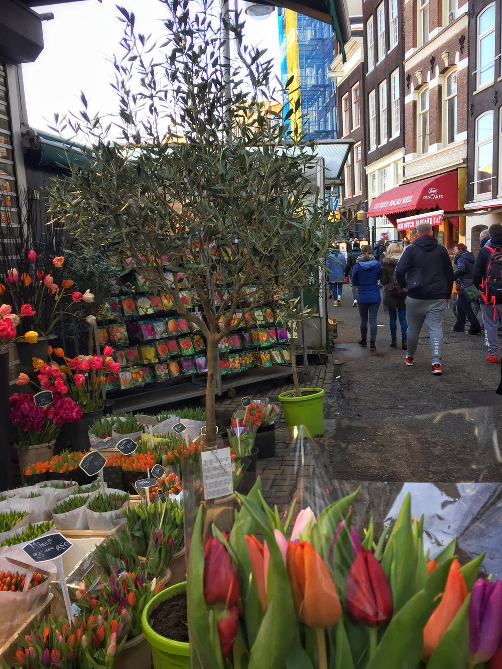 fresh tulips from Amsterdam's bustling flower market