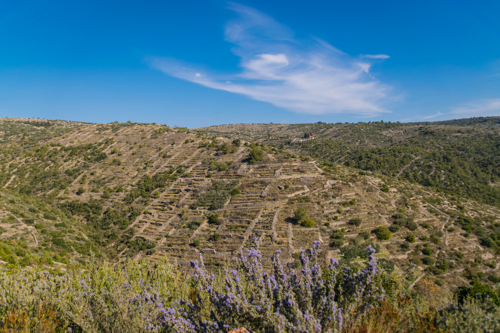 remains of dry stone walls and lavender that cover the island