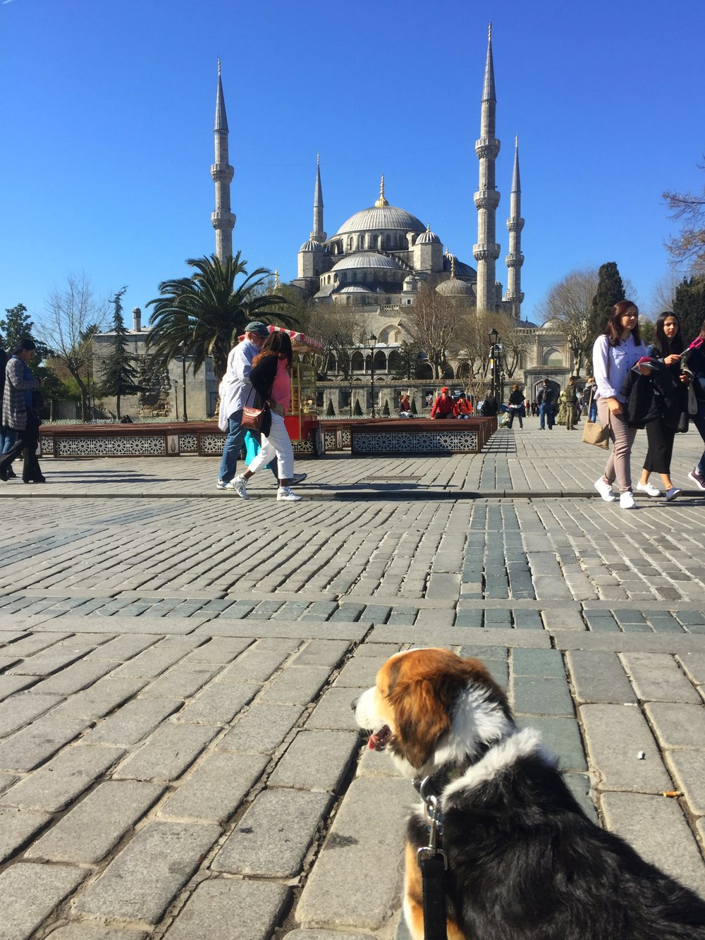 checking out the Blue Mosque