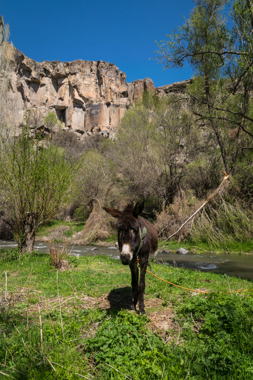 Cappadocia_Ihlara Valley-5.jpg