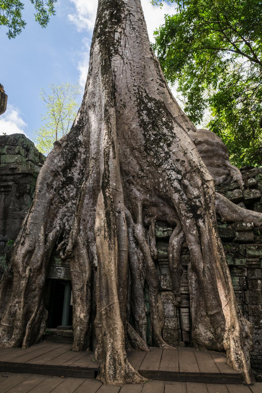 Siem Reap_AW Ta Prohm-4.jpg