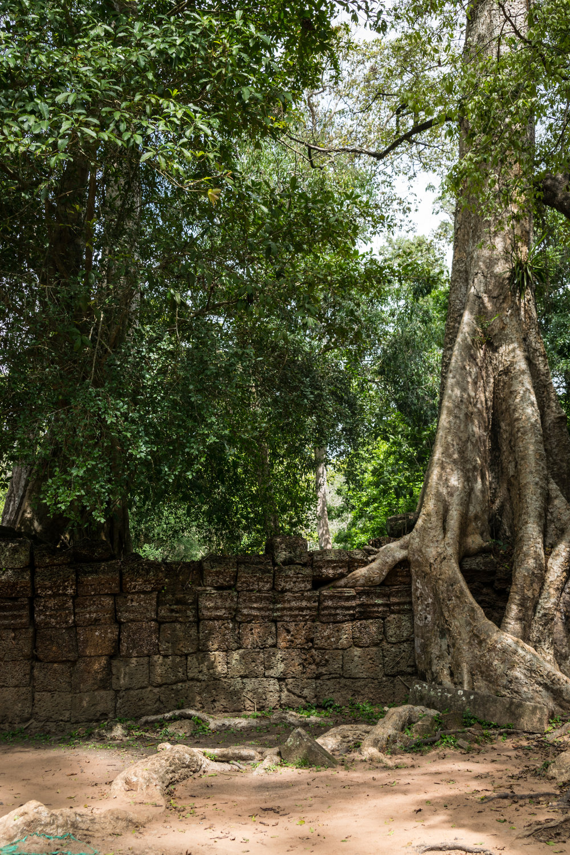 Siem Reap_AW Ta Prohm-3.jpg
