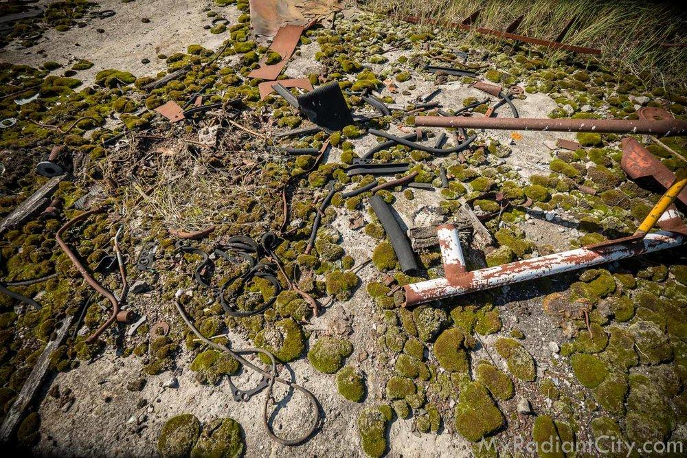 Chernobyl_nature-1.jpg