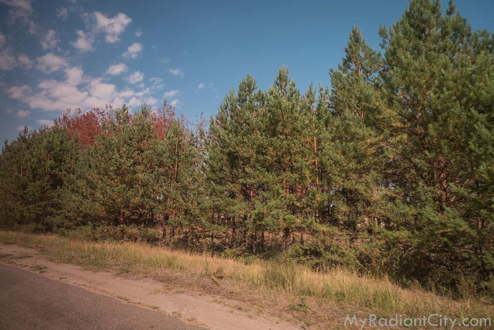 Chernobyl_nature-2.jpg