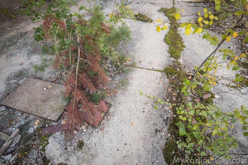 Chernobyl_nature-3.jpg