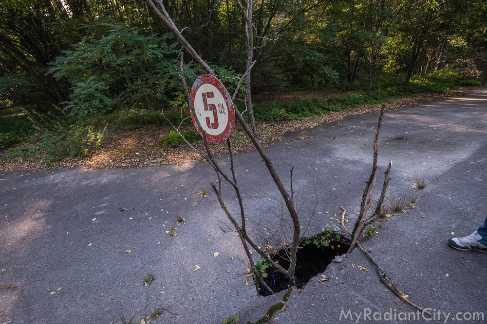 Chernobyl_nature-5.jpg