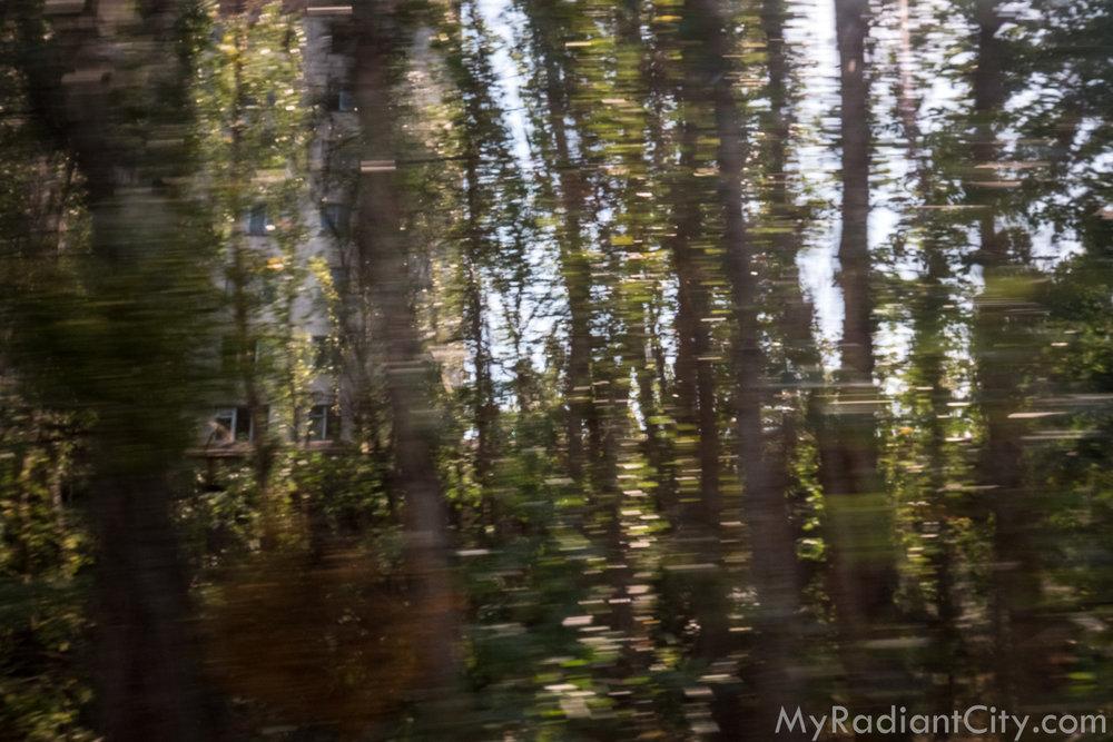 Chernobyl_nature-6.jpg