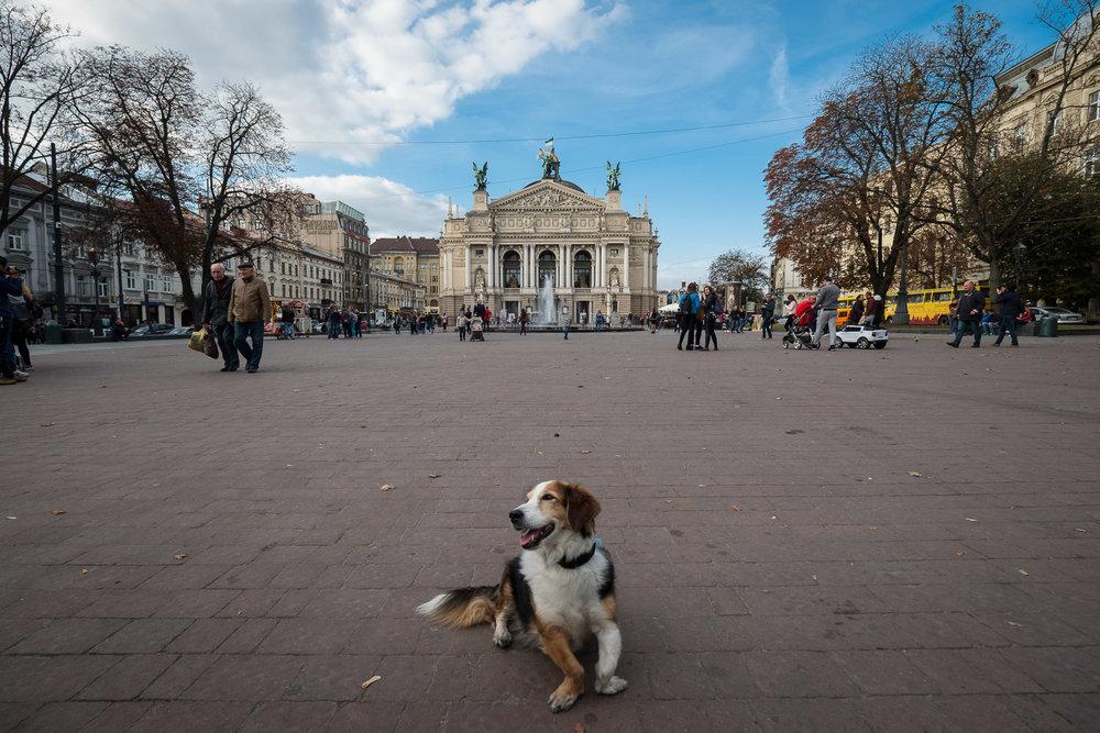 Driving schools in Lviv: telephones, addresses