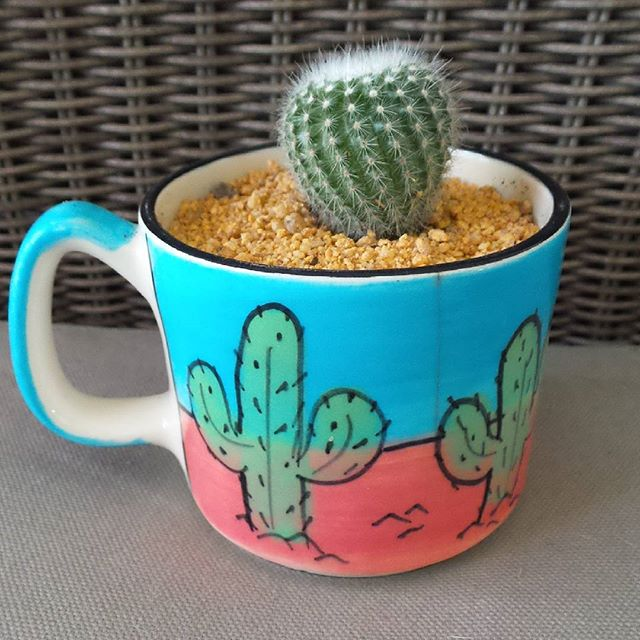 When your favourite coffee cup gets a cracking and you don't have the heart to throw it out. #upcycle  #catcusinacup  #cactus  #coffeecup  #rediscover_your_wellness  #goodforthesoul  #fnlp #functionalnutritionandlifestylepractitioner