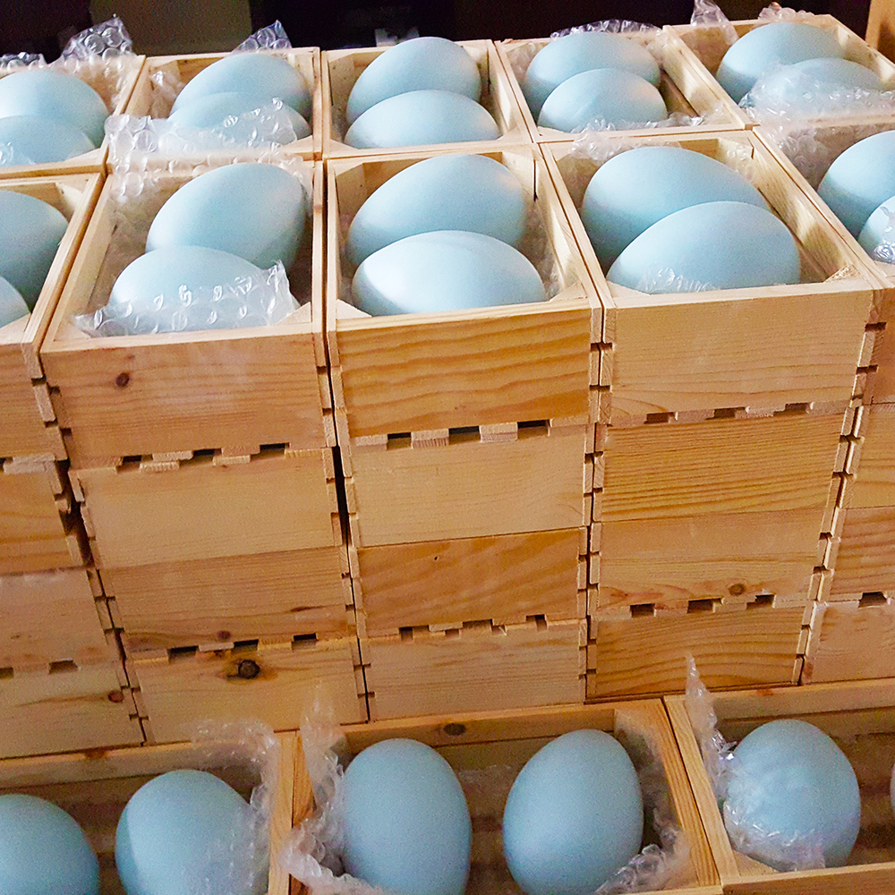 Stack of whole eggs, crated before tagging for delivery.