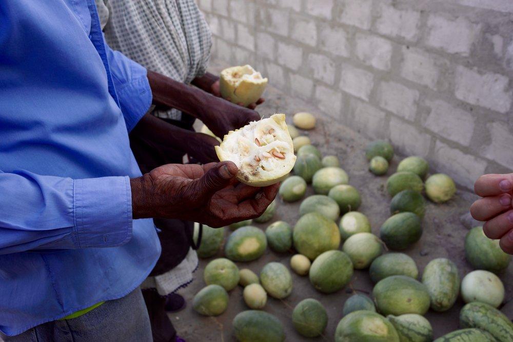 Watermelon Crops